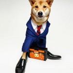 menswear-dog-05