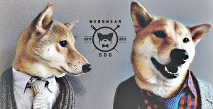 menswear-dog-promo-noticia