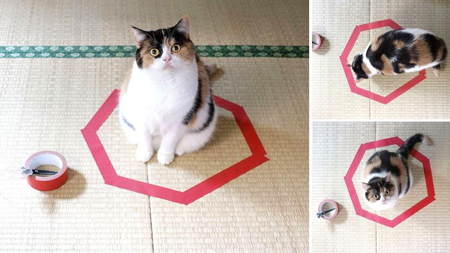 gato circulo