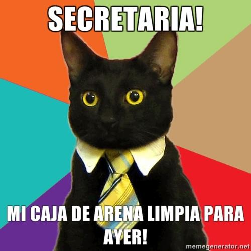 gato empresario