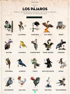 Aviario-Revista-Don-21
