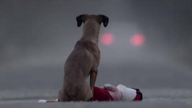 portada perro abandonado