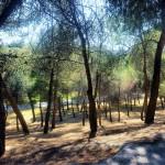 ruta-madrid-quinqui-arboleda