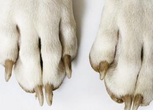 libro-patas-de-perro-apertura